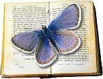 Butterfly_Garden_Logo_sm.jpg