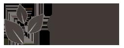 chocolate-tree-logo1.png