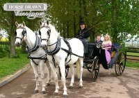 horsedrawn-carriage-white.jpg